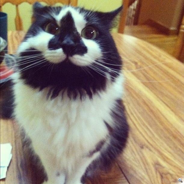 Nézzen még boldog macskát!