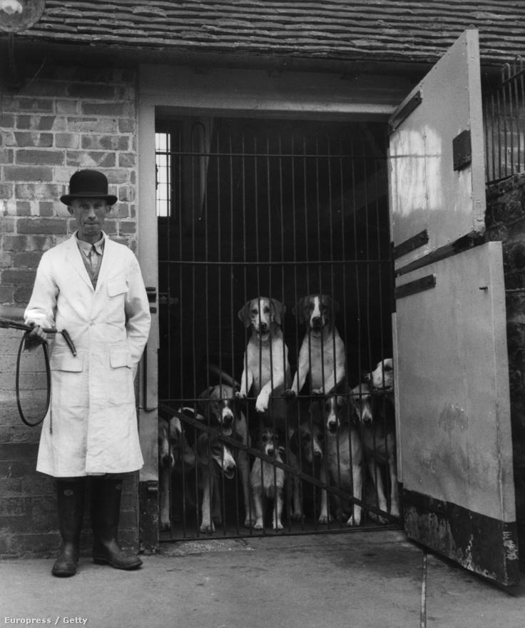 Kopók, bevetésre várva (1954)