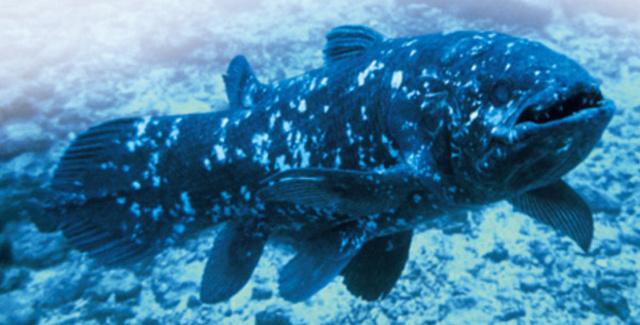 Bojtosúszójú hal
