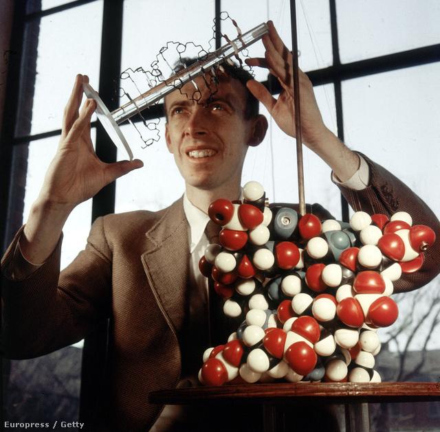 James D. Watson a DNS modelljével 1957-ben