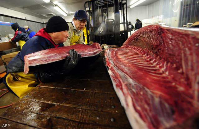New York legmenőbb sushi éttermeinek darabolják épp ezt a hatalmas tonhalat
