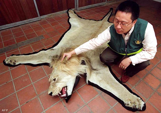 Ezt az oroszlánt egy turista bőröndjében találták Hongkongban