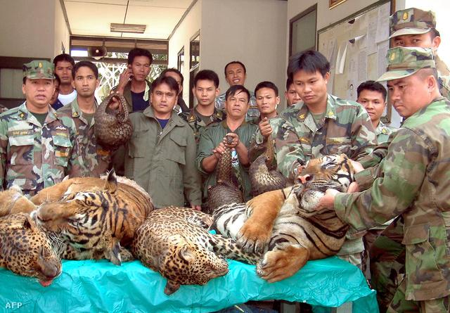 Elkapott leopárd és tigris szállítmány Thaiföld és Laosz határán