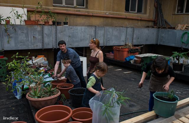 Tiborék hárman művelik most a Müszi tetőterét