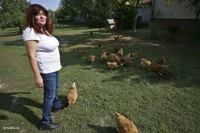 Az uborkatermesztés mellett az állattartást is támogatták naposcsibe vagy malacosztással
