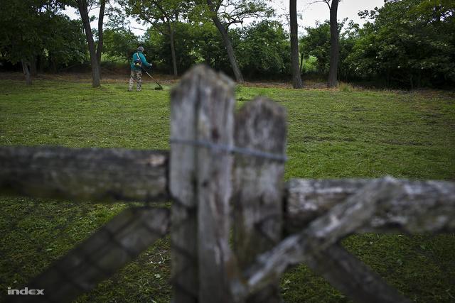 """""""Kerek erdő, ami körülvette, / A fákat még nagyapám is telepítette"""""""