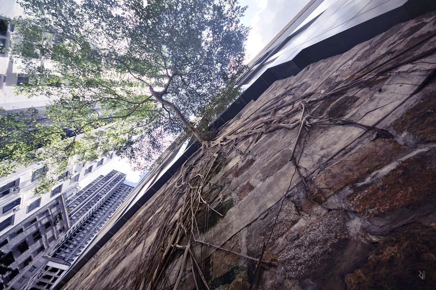A városvezetés 2005-ben kezdte el a Forbes streeten a falakba ültetett fák projektjét. Azóta több tucatnyi ilyen, vízszintesen a sokadik emelet magasságában növő fa tette híressé az utcát.