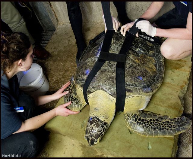 Ali a teknős