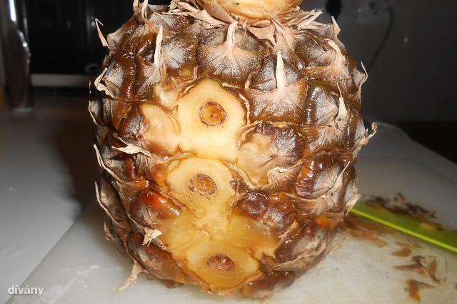 A sebesült ananásznál nincs veszélyesebb!