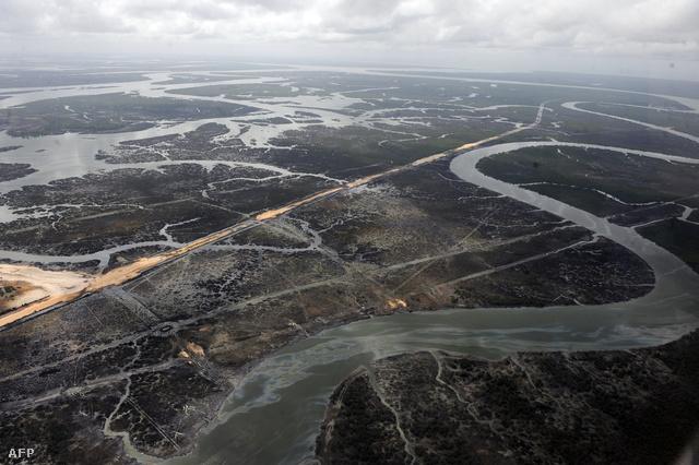 Olajszivárgás miatt kipusztult erdő Nigériában