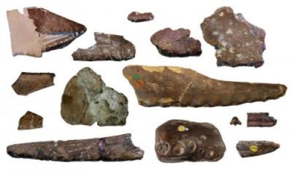 Különböző méretű és formájú Pteroszaurusz maradványok