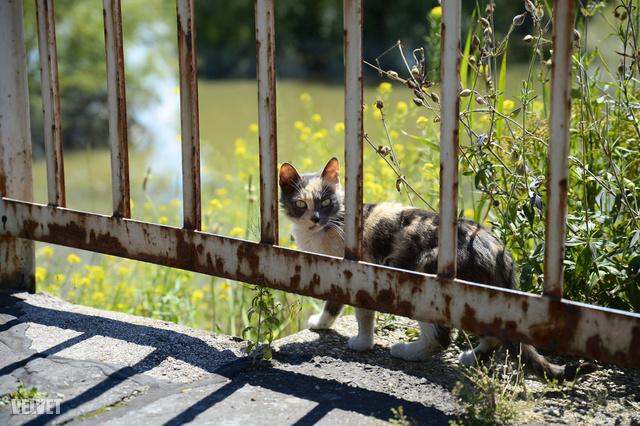 Az árvízi macska, akit három nap után tudtak leszedni a tetőről, most pedig mindenki megeteti, aki erre jár.