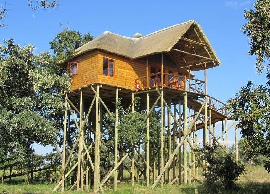 pezulu-tree-house-mountain