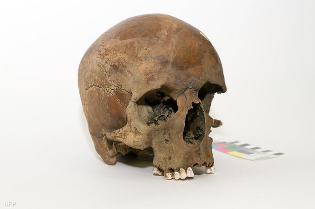 Az Új-Dél-Walesben talált több száz éves koponya felveti a kérdést, vajon tényleg Cook kapitány volt-e az első európai Ausztráliában.