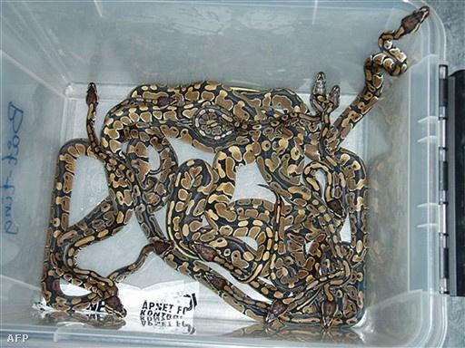 Illusztráció céljául szolgáló kígyók.