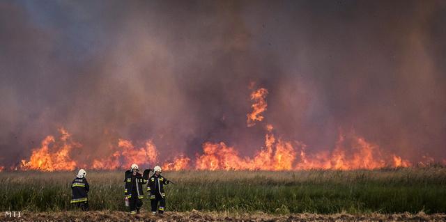 Tűzoltók a lángoló nádas előtt