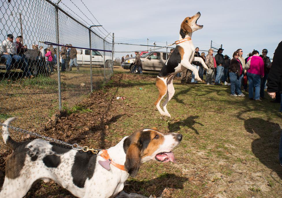 Kutyakiállítás Orangeburgban, Dél-Karolina államban, 2013-ban. A 13 ezer lakosú várost ilyenkor 20 ezer turista keresi fel átlagosan.