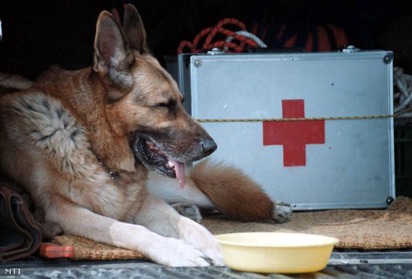 Mancs 2003-ban Szirmabesenyőn, ahol egy eltűnt kisfiú keresésében segédkezett