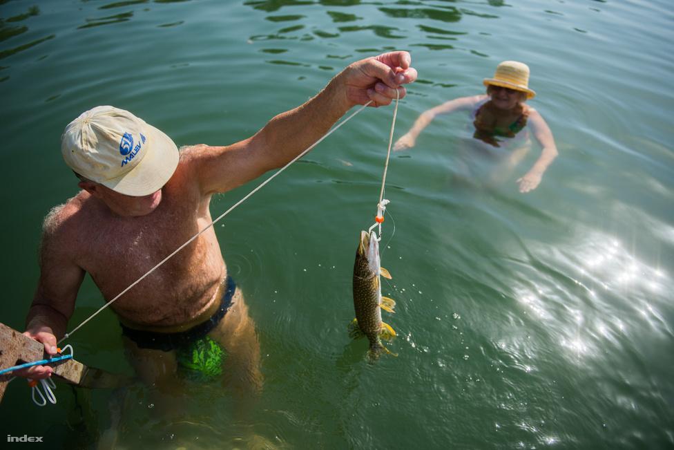A tó területén három horgászegyesület működik: a Jó Szerencsét, a Barátság és az Összefogás. A 2006-os borzalmas halpusztulás ma már csak rossz emlék. Akkor karbofurán elnevezésű rovarirtó szer került a vízbe, máig nem derült ki, pontosan hogyan, kinek a hibájából. Szilágyi Miklós halőr, a bányató polgári őre azt mesélte: 500 mázsa hal pusztulását regisztrálták akkor. 2013-ban azért, hogy valaki teljes jogú horgász lehessen a tavon, összesen 28 ezer forintot kell fizetni a Jó Szerencsét horgászegyesületnél, ebben benne van a tagdíj, a területi engedély és az állami horgászjegy. A tó fő halfaja a fekete sügér, de van keszeg, süllő, ponty és csuka is.