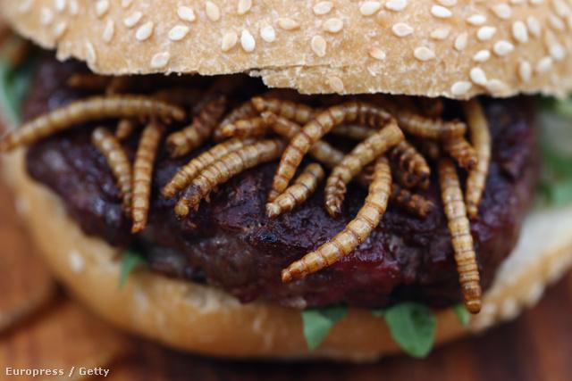 Így néz ki egy galambburger BBQ lisztkukacokkal