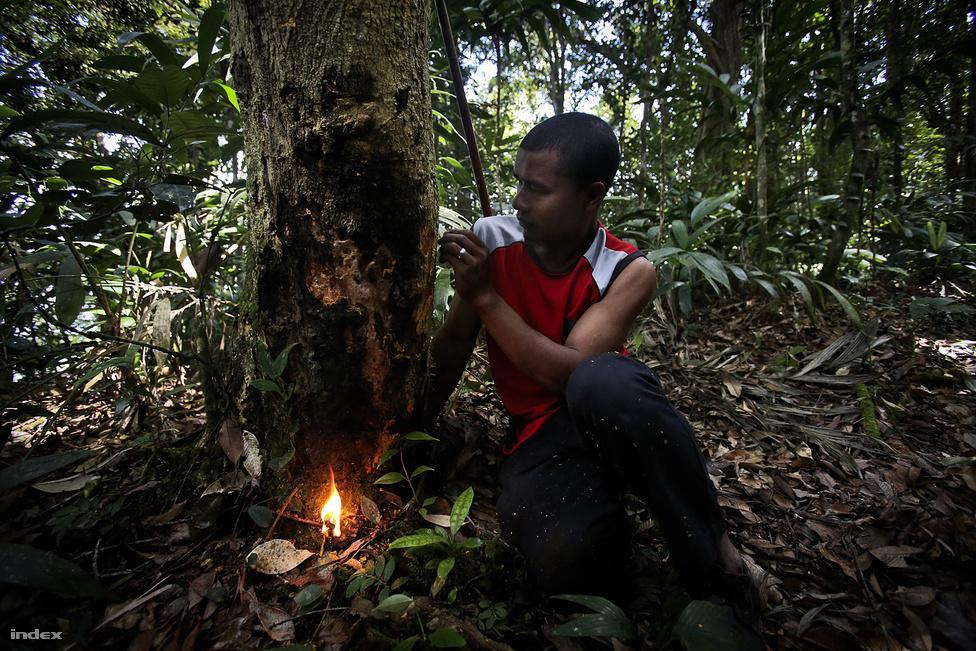 A dzsungeltúra keretében a maláj őslakos orang aslik mutatják be a túlélőpraktikákat                         tűzgyújtástól az ehető növényeken át a kisállatcsapda elkészítésének rejtelmeiig. Persze aki akar,                          magányosan is nekivághat az esőerdőnek, de akkor a szálláshelyen jelezni kell, hova indul, hogy ha                          nem érkezik vissza időben, legalább tudják, merre keressék.