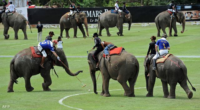 Hogy az utcai munkákra kényszerített elefántoknak gyűjtsenek így pénzt. Díjak sincsenek, a győztes egy jelképes bronzkupát nyer