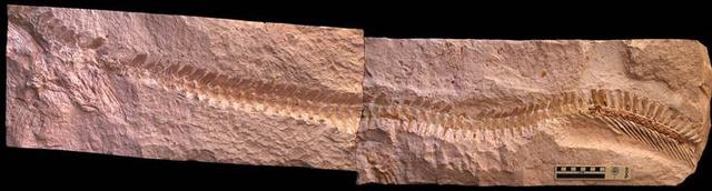 8C8930319-fossil-spine.blocks desktop large