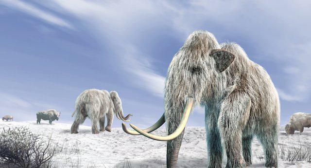 69766211 mammoth-spl