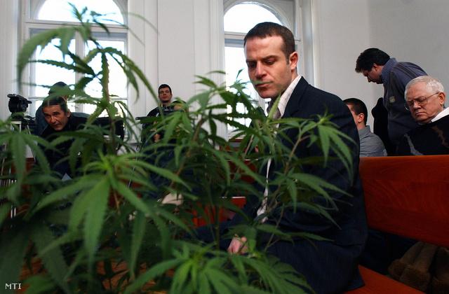 2006. január 9. Juhász Péter, a Kendermag Egyesület alapító tagja a Pesti Központi Kerületi Bíróság előtt, ahol megkezdődött a Kendermag Egyesület által elindított polgári engedelmességi mozgalom elleni per.