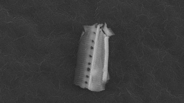 diatomfragment-1-762x428