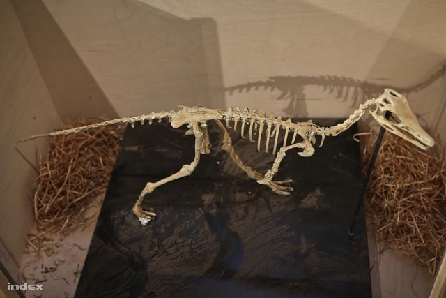 Egy bedobozolt Alvarezsaurus