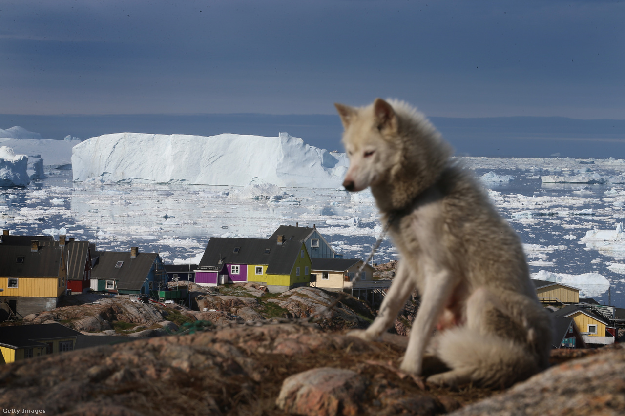 Szánhúzó kutya pihen egy leszakadt jéghegy árnyékában. A globális felmelegedésnek köszönhetően pedig a korábban elérhetetlen erőforrások kitermelése is lehetővé válik. Az Északi-sarkot nem védik az Antarktiszhoz hasonlóan nemzetközi egyezmények. Oroszország mellett az Egyesült Államok, Kanada, Dánia és Norvégia is rátenné a kezét az Arktisz egyes részeire. Ennek az az oka, hogy egyes vélemények szerint a bolygó kiaknázatlan olaj- és földgázkészleteinek negyede található a sarkvidéken.
