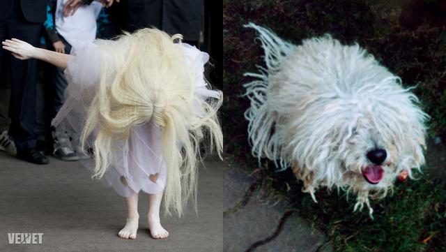 Gaga, illetve kollégánk kutyája, Prücsike (kivétel, merthogy nem albínó)