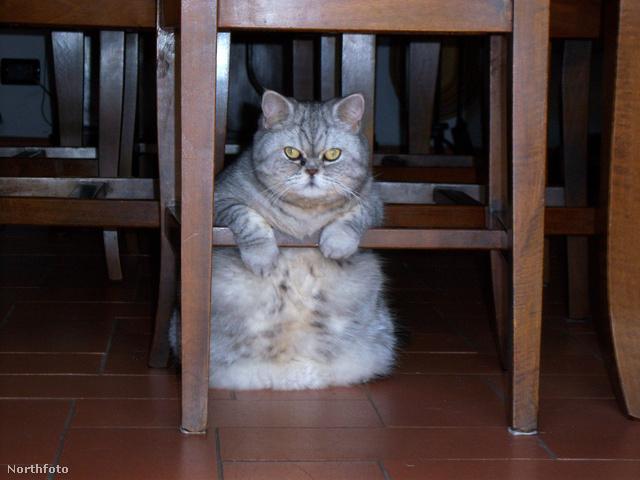 solent fat cat 3