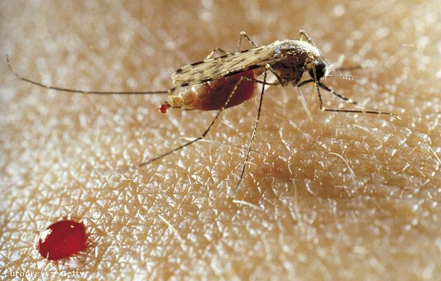 A szúnyogokat is elfelejthetjük lassan