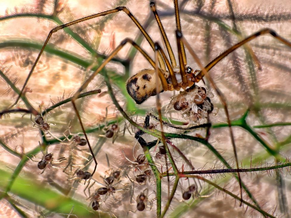 Az édes otthon Egy bokor alján megbúvó pókanya éppen kikelő kicsinyeivel