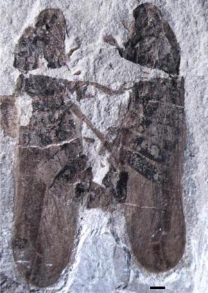 165 millió éves fosszília