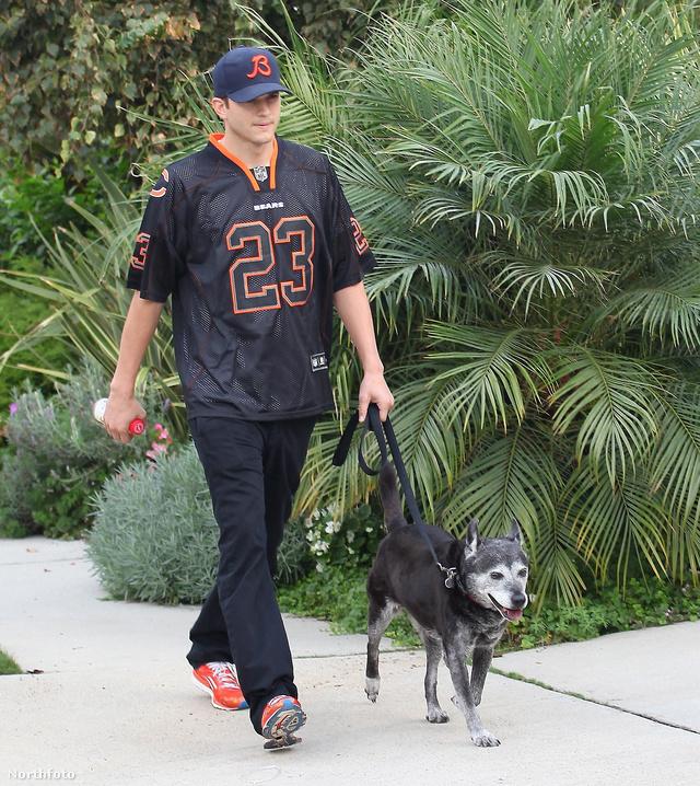 Ez egy korábbi fotó, és Kutcher nem ezt a kutyát vitte a kórházba: ez a mentett eb boldogan él Kunissal és a színésszel Los Angelesben.