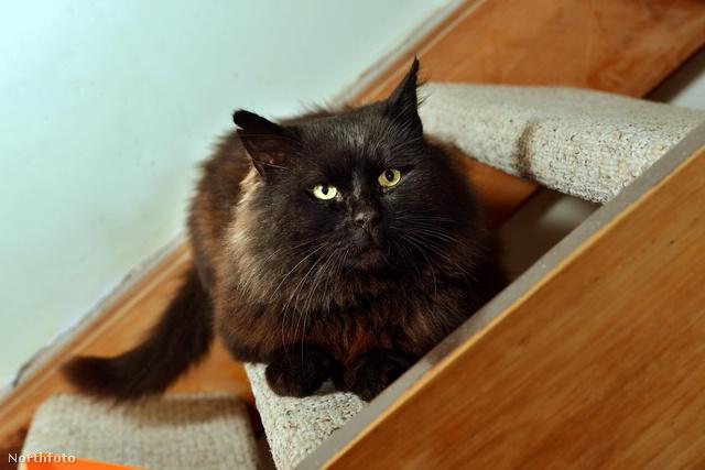 tk3s swns terror cat 08