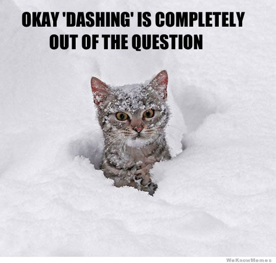 cat-in-snow-meme