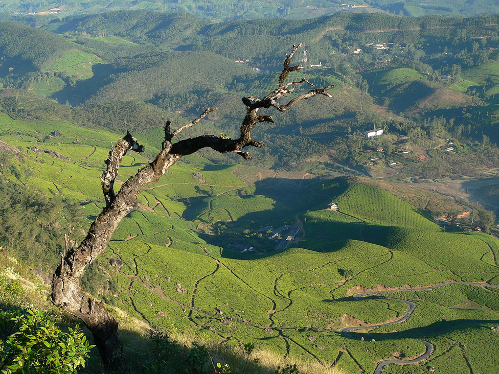 Teaültetvények a Munnar városát övező hegyvidéken: ilyen terepre valók igazán a Mahindra klasszikus terepjárói és összkerekes kisteherautói, tele is vannak velük rendesen a keskeny szerpentinek. Még mindig a faék egyszerűségű ősmodell, a CJ340 a legelterjedtebb, biztosan ezen a képen is rejtőzik néhány, csak a felbontás miatt nem fogjuk megtalálni. A világháborús amerikai gépközlegény megsegítette Indiát, és gazdaggá tette a Mahindra családot, akik a járműgyártás mellett érdekeltek többek között a hadiiparban, az energiatermelésben, a logisztikában, a pénzügyi szolgáltatásokban, az építőiparban és az ingatlanfejlesztésben
