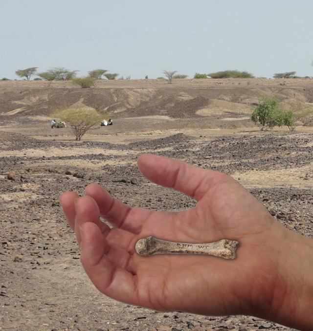 human-hand-fossil