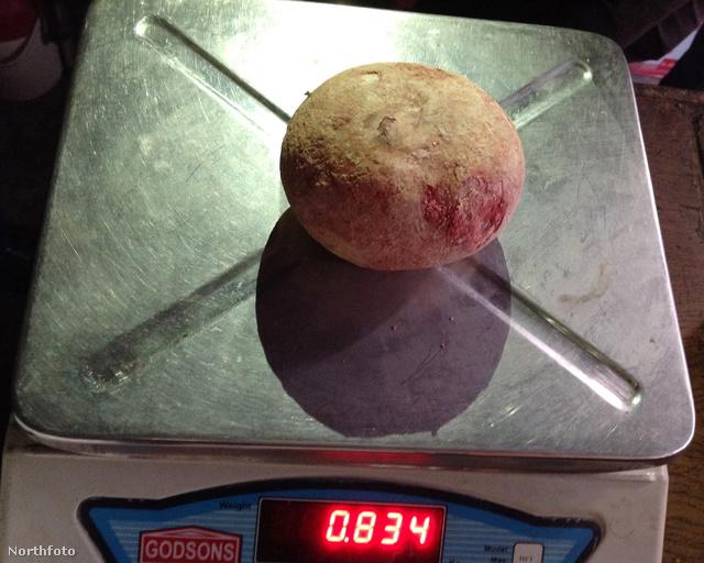 834 gramm, csoda, ha nem világcsúcs!