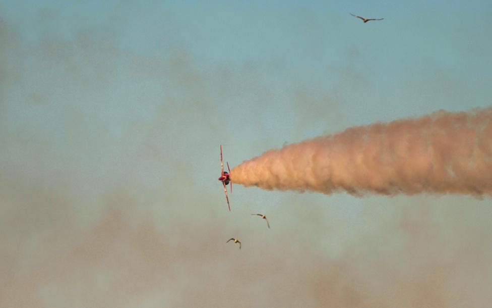 A Brit Királyi Légierő akrobatacsapatának egy pilótája inzultálja a sirályokat Douglas kikötője felett.