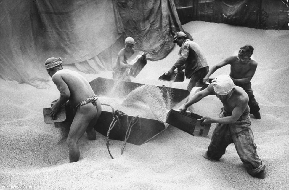 Öten állnak térdig a rizsben, amit az éhező japánoknak küldenek majd.