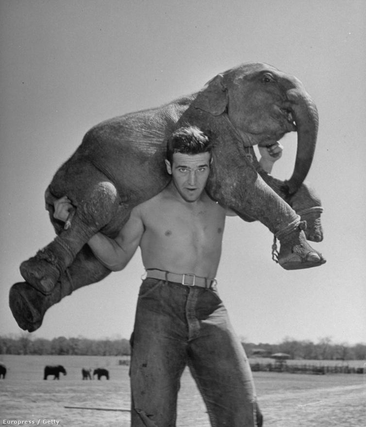 Cirkusz, lovak, elefántok - szintén Cornell kedvencei voltak. A képen Butch, a Dailey Cirkusz kiselefántja látható egy férfi nyakában. Egy ekkora elefánt körülbelül 250 kilót nyom.