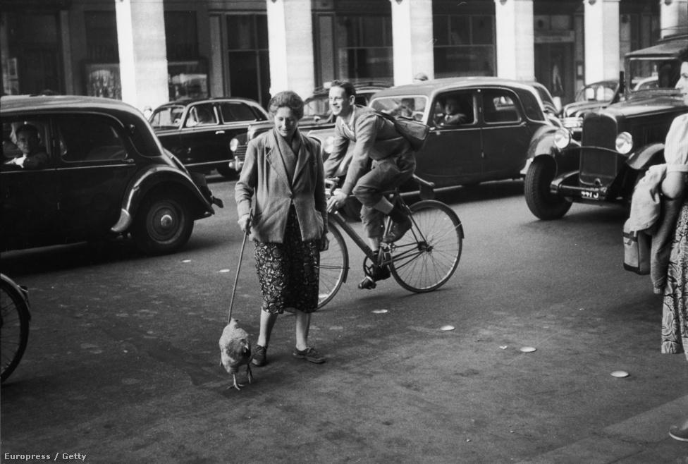 Egy újabb bizonyíték arra, hogyan volt képes elkapni a mindennapok abszurditását, itt éppen egy nő sétáltatja a csirkéjét Párizsban. Nina Leennek még a csirkénél is különösebb lény volt a kedvenc állata: a denevér. Repülő  macskáknak hívta őket, és hosszú órákat töltött a legsötétebb barlangok mélyén, hogy egy-egy különlegesebb példányt lefotózzon, több könyvet is kiadott a bőregeres képekből. Saját denevére, amit sétáltathatott volna, viszont nem volt.