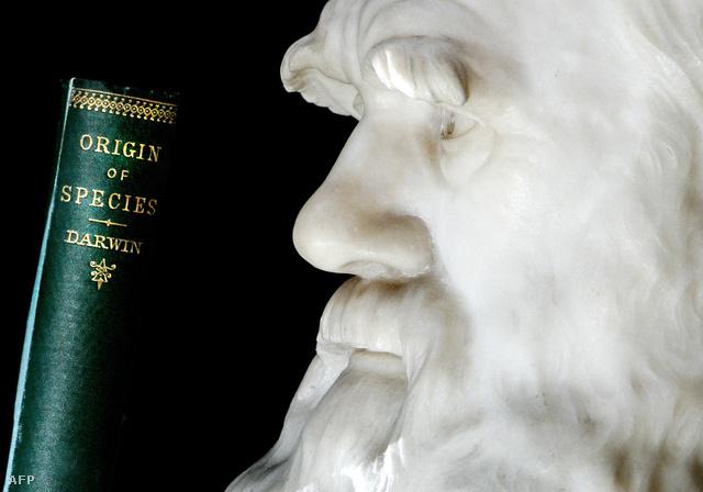 England kiegészítené Darwin természetes szelekcióról szóló elméletét