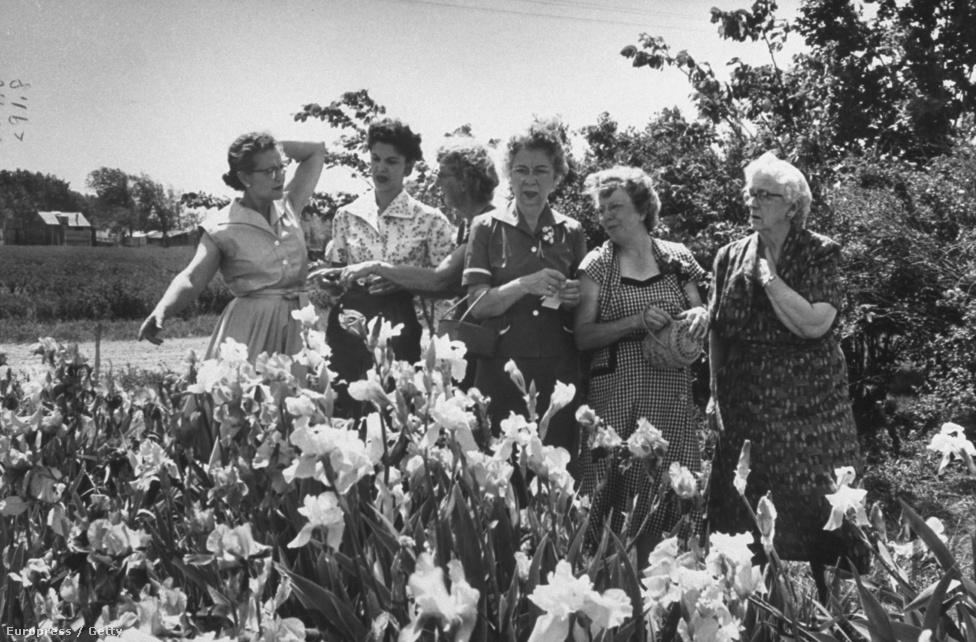 Hölgyek tanulják a virágápolás művészetét a Floralore Írisz Klubban, 1956-ban.