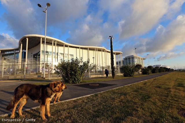 Kóbor kutyák Szocsiban, a Médiaközpont épülete előtt, 2014. január 8-án.